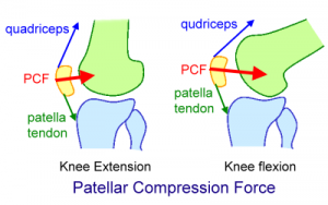 PatellarCompressionForce