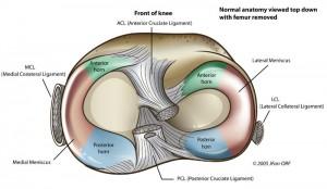 meniscus top
