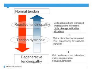 tendonphys